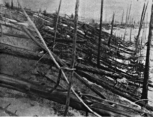 [The Tunguska asteroid impact in 1908 knocked down and burned trees over an area the size of a large city. Image credit: public domain. From http://en.wikipedia.org/wiki/File:Tunguska_event_fallen_trees.jpg]